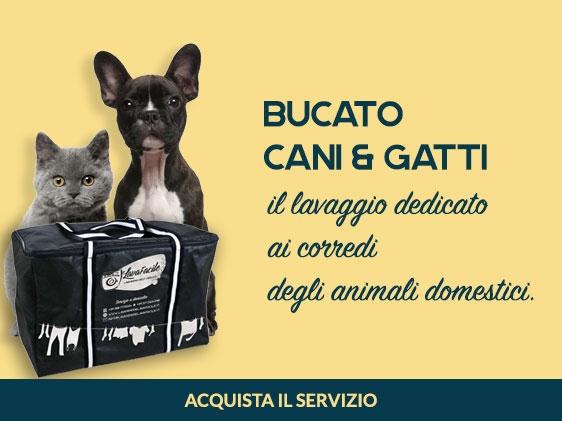 Lavanderie LavaFacile -  La prima lavanderia self service a Rimini con servizio PET.